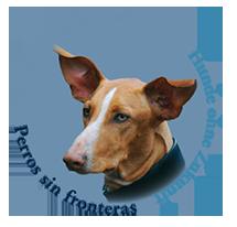Hilfe für Hunde in Not